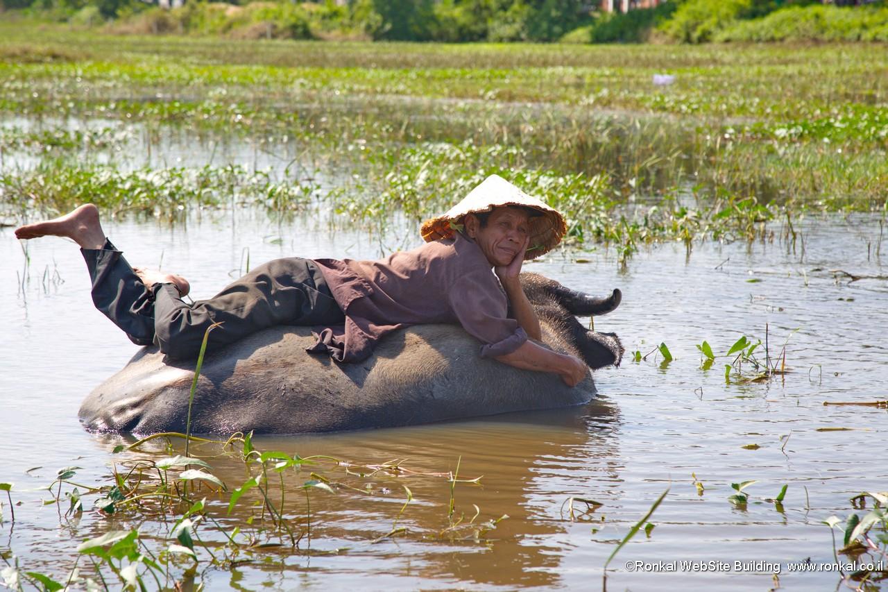 בופלו וחוואי ויטנאם