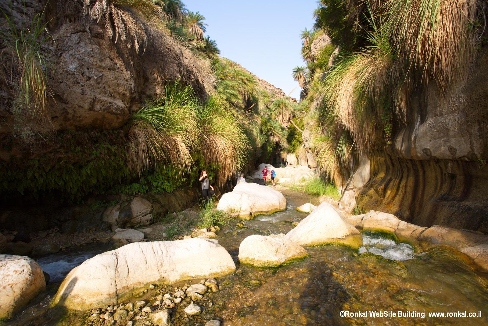 wadi ibn-hammad Jordan נחל אבן -חמד ירדן