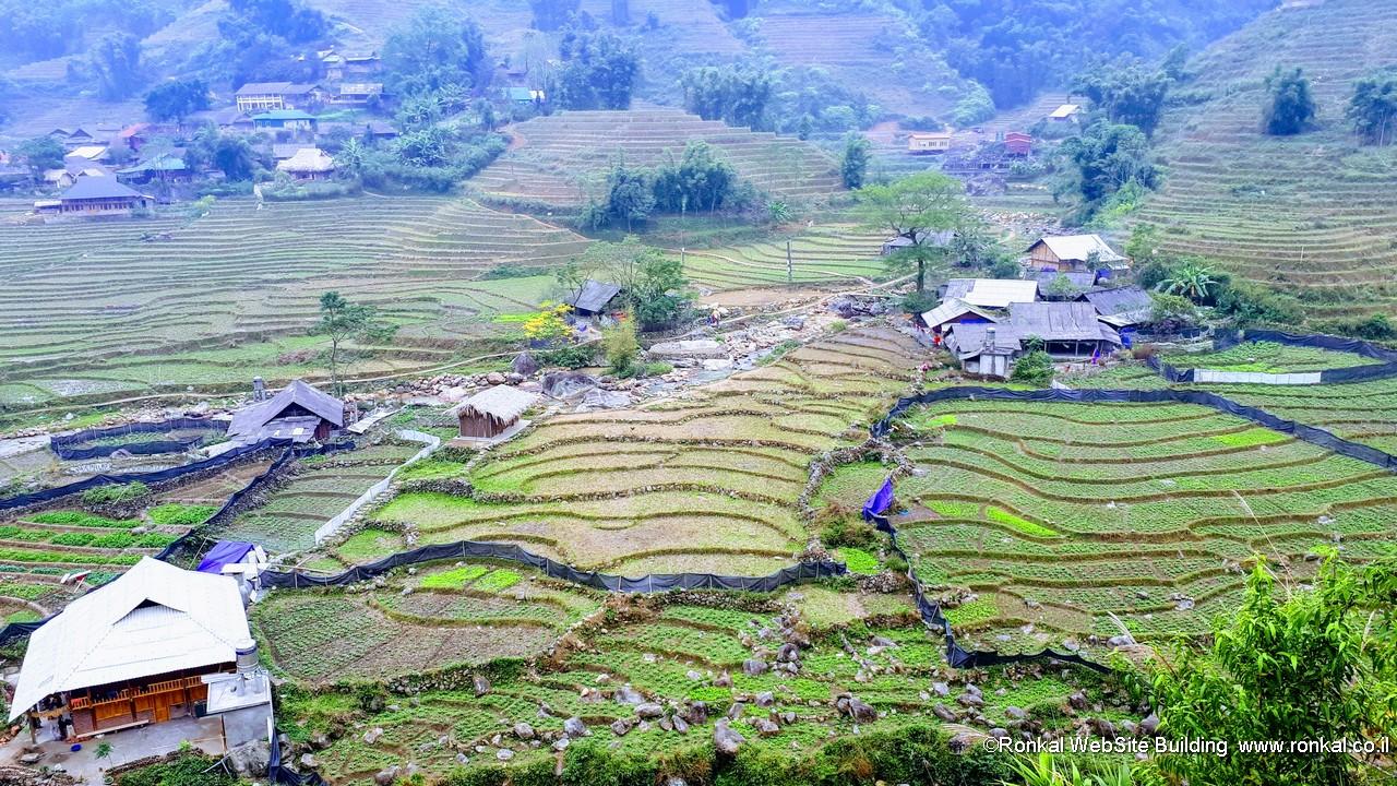 שדרות אורז ויטנאם