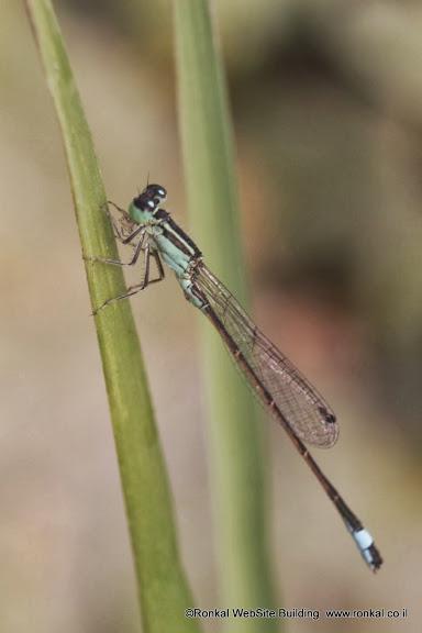 צילום חרקים במקרו